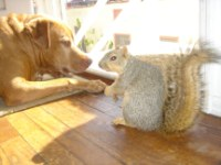 Suzanna and the squirrel